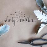 dusty_miller3